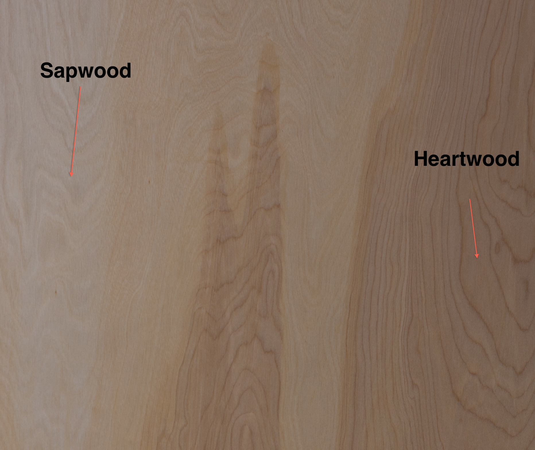Sapwood-Heartwood